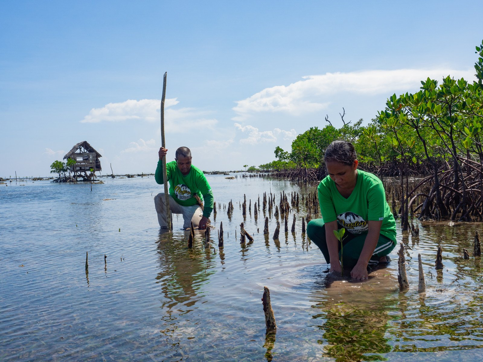 Members of the Maslog Coconut Farmer and Fishermen Association, a local fisherfolk organisation in Lawaan (in the province of Eastern Samar), planting mangrove saplings to restore a mangrove forest that was damaged by Super Typhoon Haiyan in 2013. Together with the support of Oxfam and our local partner, the association has planted more than 20,000 mangrove seedlings since 2015. (Photo: Elizabeth Stevens / Oxfam)