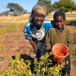 Zambia - Changing lives with chilli