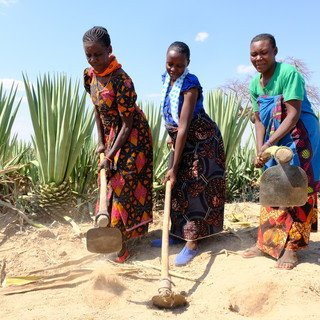 Tanzania - The plant that's changing small farmers' lives